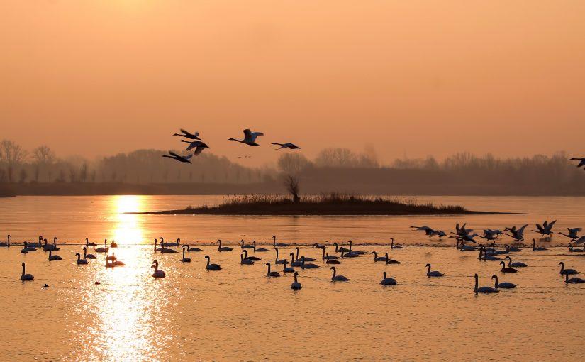 Comptage Wetlands